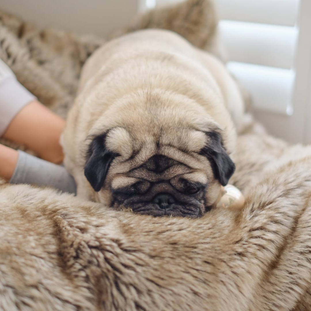 Keep your house organised with pets